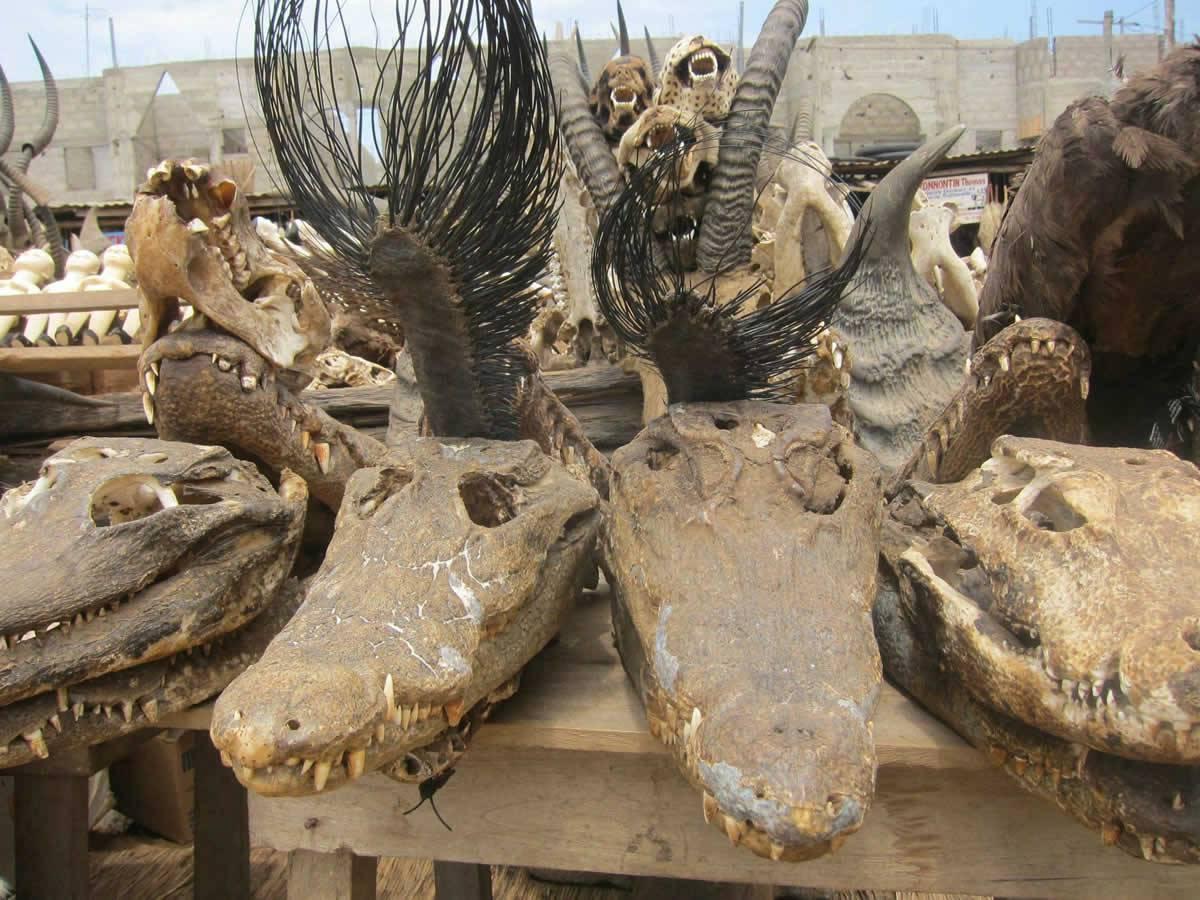 Togo: A la découverte du ''marché des fétiches''